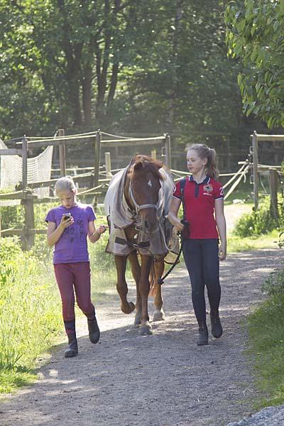 Vi leder hästarna med kedjegrimskaft över nosen.